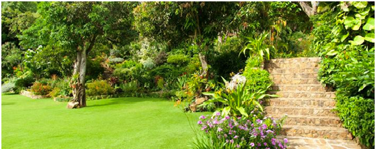 Irrigation Systems are the Key to a Beautiful Yard