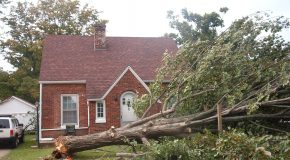 Taking a Tree Down On Your Property Is Not An Easy Job.